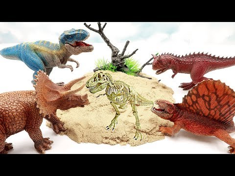 Who is dinosaur bone? Dinosaur Battle and Dino Skeleton Toy. Dinosaur fossil Science Kit For Kids