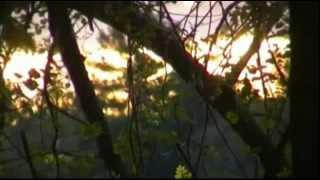 VAAV - Limbic Undulation (feat. Piertomas Dell'Erba)
