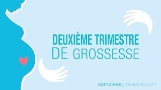 Deuxième Trimestre de Grossesse - La Grossesse trimestre par trimestre
