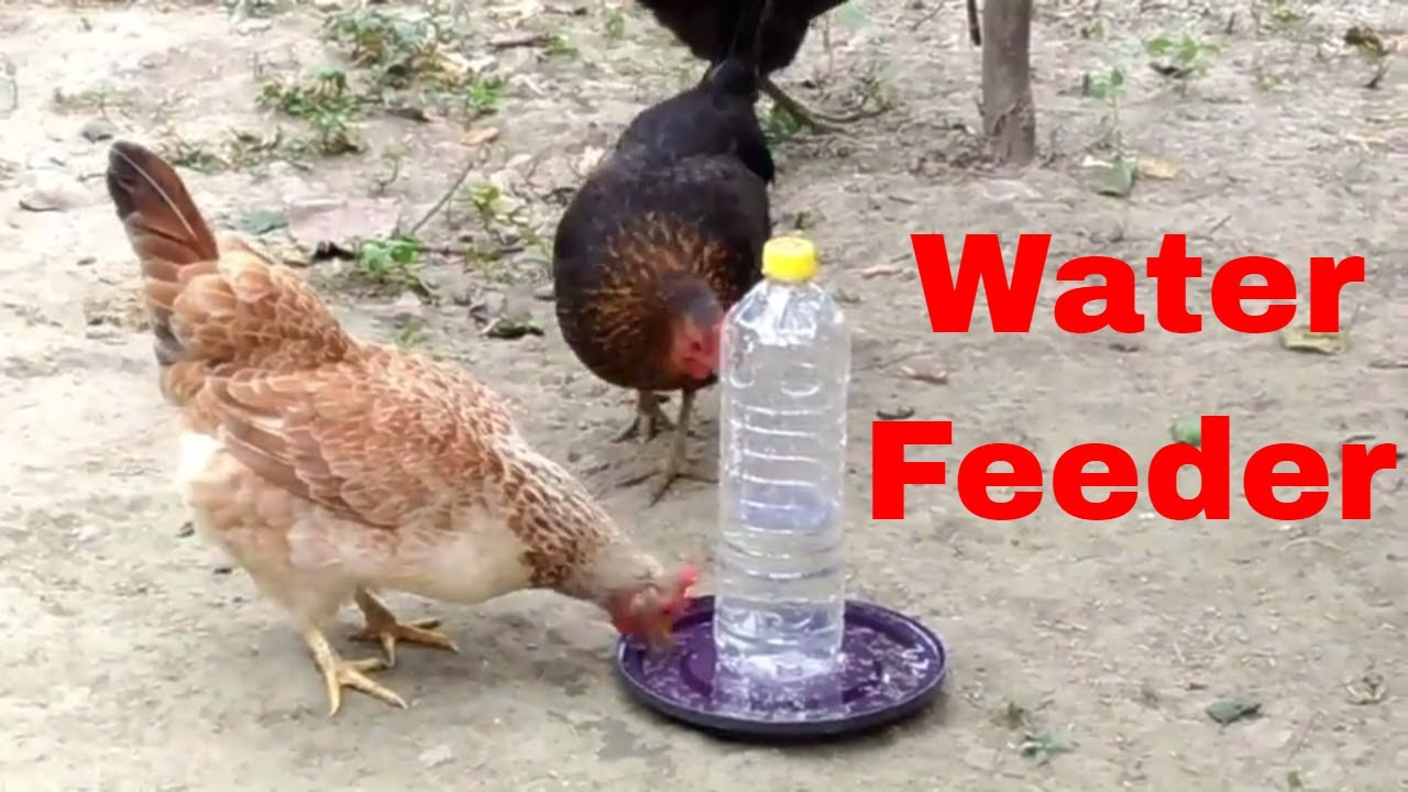 Easy Homemade Water Feeder for Chicken