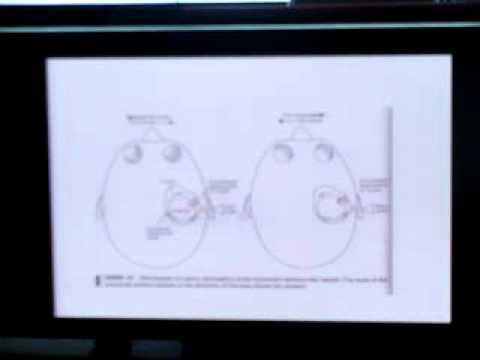 Applied anatomy & physiology of vestibular system 4 - YouTube