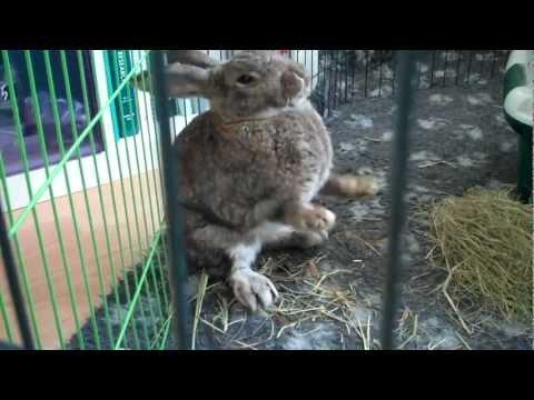 E-cuniculi konijn kan 'genezen'