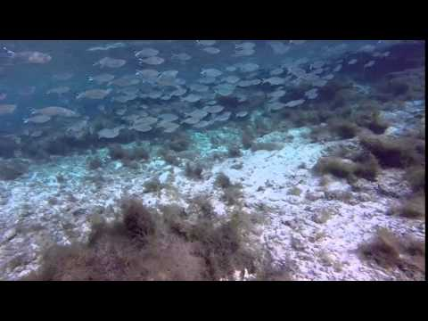 Spearfishing Dec 2014, Majuro Lagoon, Marshall Islands, Berger