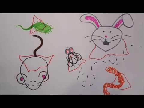 Model Organisms Science Sketch
