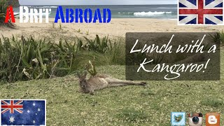 Lunch with a Kangaroo!