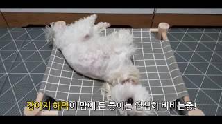 강아지 해먹 인증샷 찍는 중-콩이의 반응