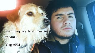 Bringing my Irish Terrier to work. Vlog 002.