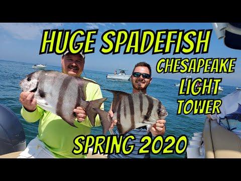 Spadefish Chesapeake Light Tower 2020