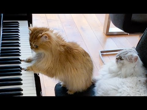 The Musical Duo You Needed