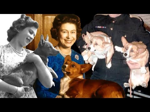 Billy and Julie - TRENDIN' WITH TRISTAN: The Queen's Corgis