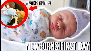 NEWBORNS FIRST DAY & MEETING THE PUPS! | Casey Holmes Vlogs