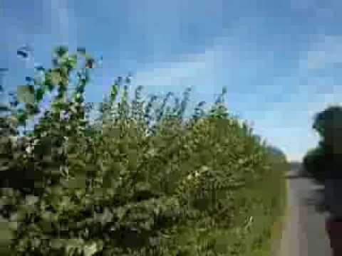 Wassell Grove, Foxcote, Wynall Lane Careless Green Wollescote