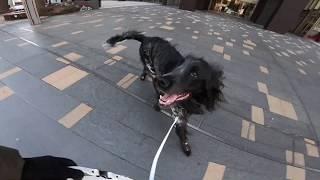 今朝は北風が強くて寒かったですが、大型犬、ラージミュンスターレンダ...