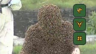 Terraria bee armor be like...