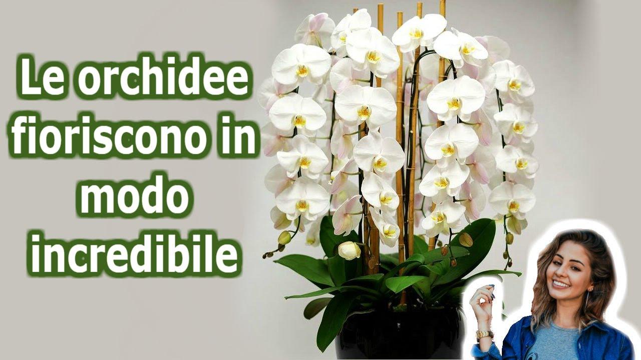 Download 7 Segreti per far fioreire la tua orchidea tutto l'anno | Lo so