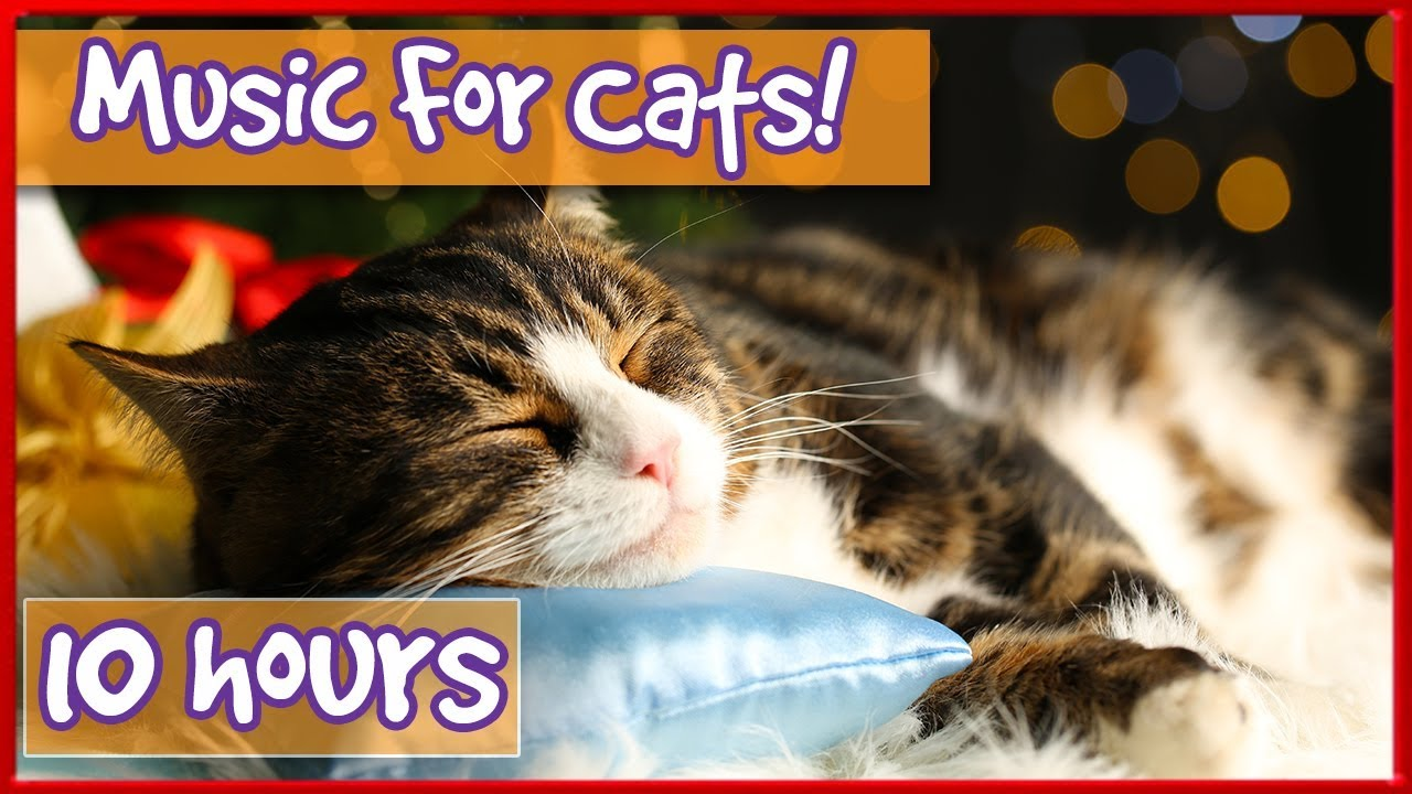 Pet Therapy Music Cat Music With Nature Sounds Purring Bird Noises To Relax And Calm Kittens Youtube