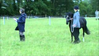 Black welsh section A pony for sale in cumbria, uk