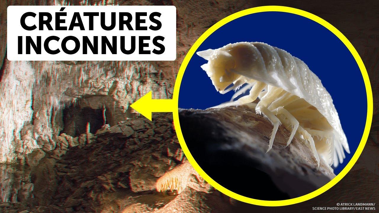 Download Des Scientifiques Ont Ouvert Une Grotte Vieille De 5 Millions D'années Et Sont Restés Sans Voix