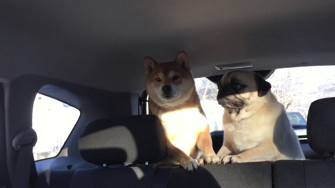 Watch dogs 2 poker