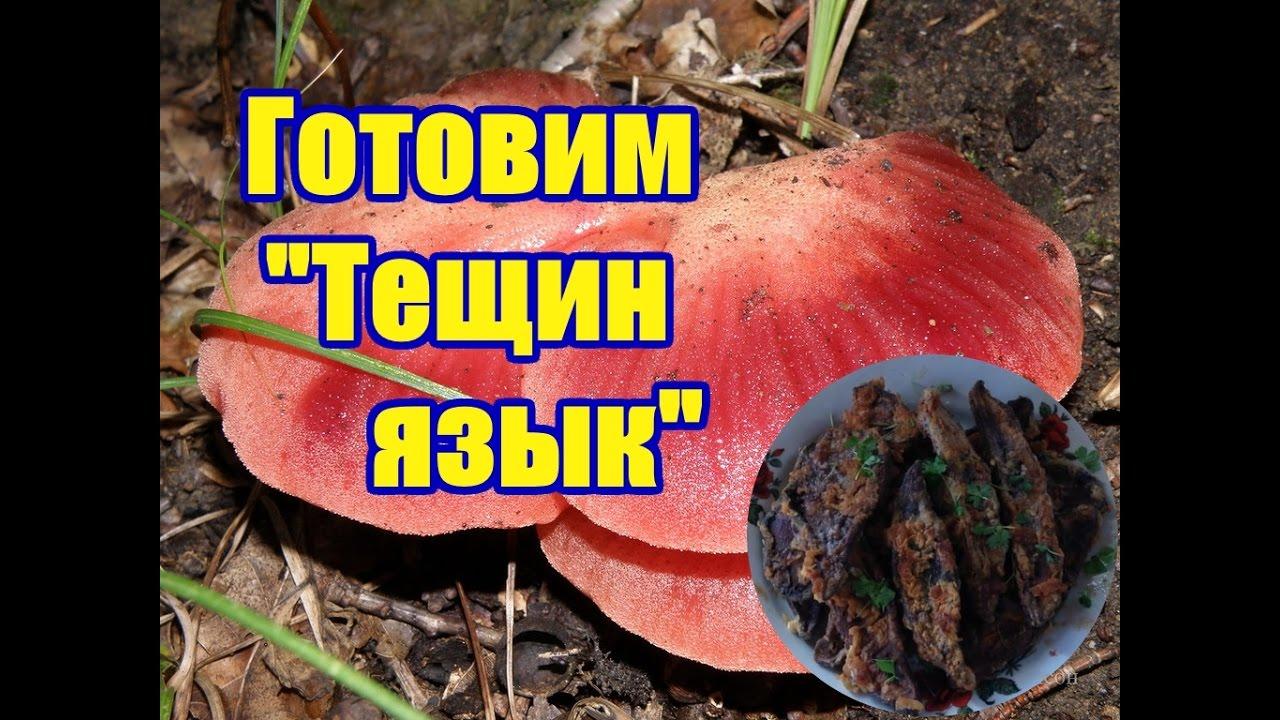 как выглядит гриб тещин язык фото