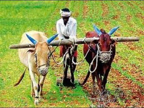 """International Organic & Millet Mela - 2019"" | 7 Jan 19 | Krishidarshan"