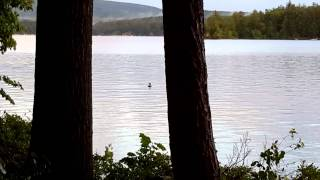 Lake Wentworth Pano