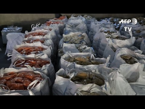 World Food Programme prepares aid for Syria's starving