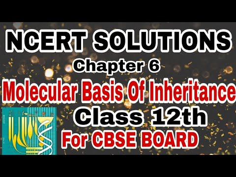 Biology 12th NCERT Solutions of Ch-6 Molecular Basis Of Inheritance For CBSE Boards thumbnail
