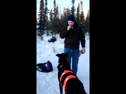 Dog Training Yellowknife