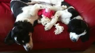 Molly en Milly - een Dog Rescue Greece Movie