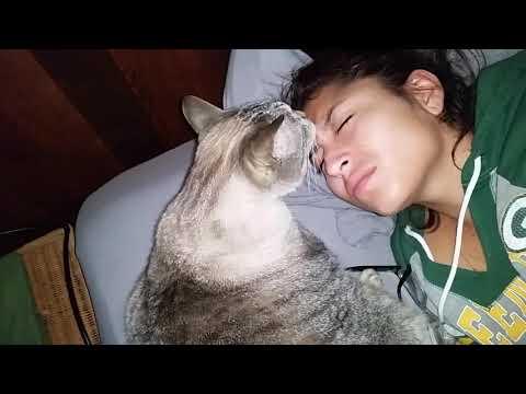 30 pound cat Alarm clock