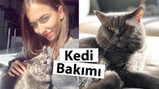 Evde Kedi Beslemek - Kedi Bakımı - Tüy, Tırnak, Mama, Aşılar