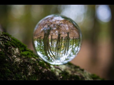 #9 Crystal Ball Woodland Shoot and Lightroom Processing