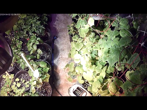 PTK Greenhouse Live Stream #1