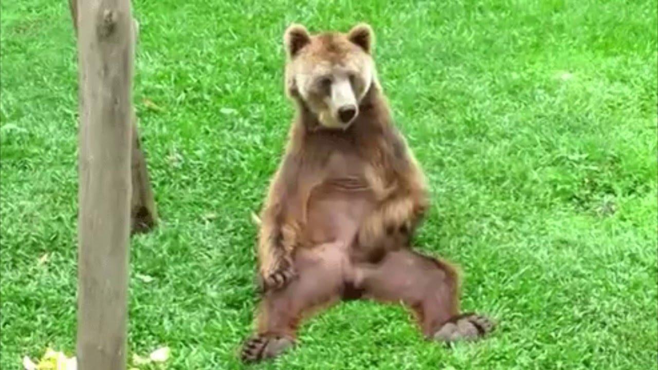 Медведь забыл дома балалайку медведь играет калинку на балалайке