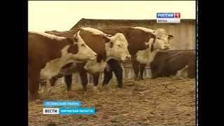 О плюсах и минусах мясного животноводства (ГТРК Вятка)