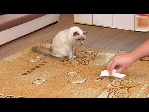 Как сбить запах кошачьей мочи с пола в домашних условиях