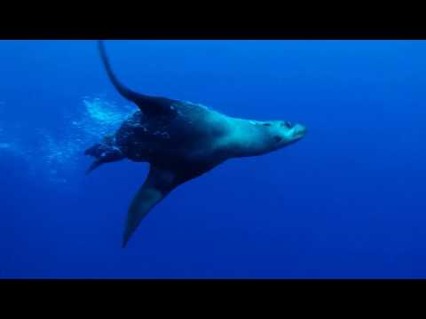 Diving With Seals Is Special