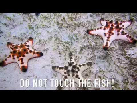 Message Me - Marine Conservation Project - Part 2 - The Philippines