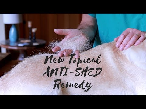 Stop Dog Shedding With New Anti-Shed Remedy