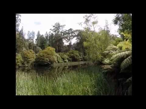 Outdoor Pond - National Rhododendron Gardens, Melbourne, Australia