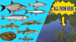 Ton of Different Species - Same Spot [Russian fishing 4]