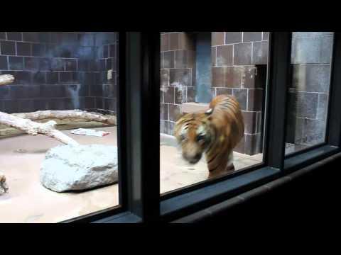 OMAHA ZOO TRIP 2011 - CRAZY ANIMALS
