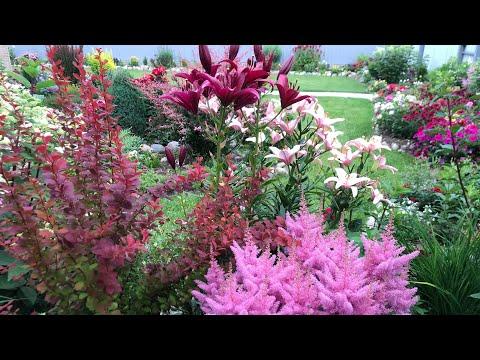 Вопрос: Какие растения идеально подходят для узорчатых цветников?