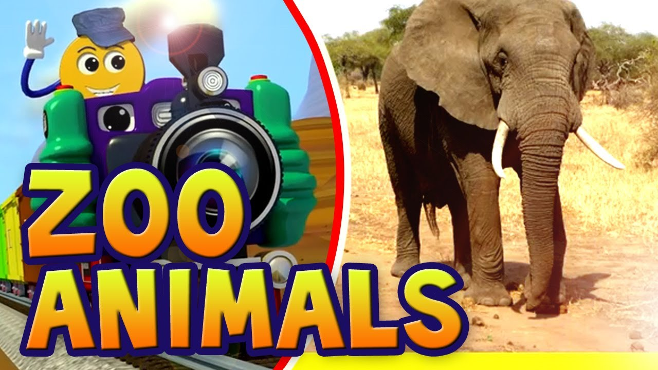 Let's Learn About Animals - Preschool Learning - YouTube