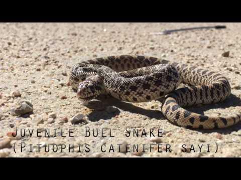 spring-snake-madness!-(part-1)