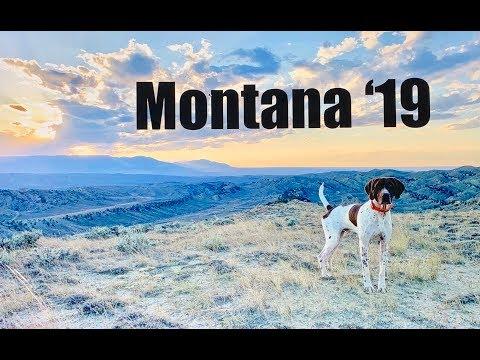 Montana Early Season Hunt 2019