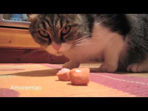 Il Gatto parlante / The talking Cat