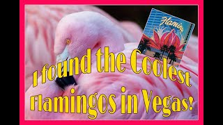 I found Pink Flamingos in Las Vegas!