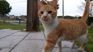全国各地で撮り歩いた野良猫動画を毎日アップ!!チャンネル登録はコチラ...